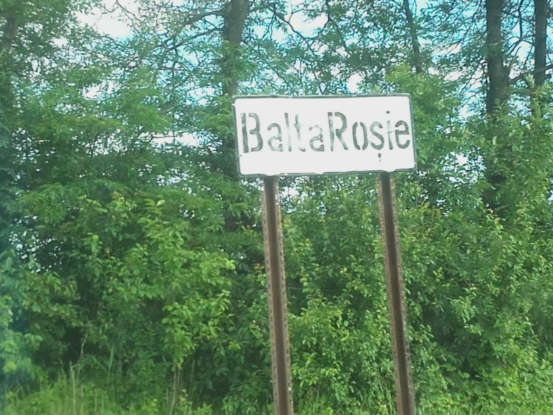 Free Miorița_Balta Rosie_8
